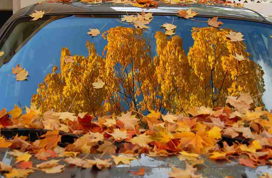 autumn car windsheild fall