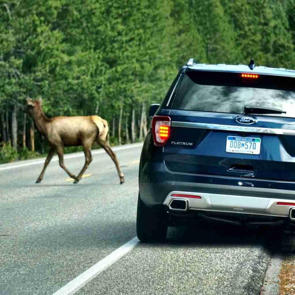 Lauren Fix Ford explorer elk