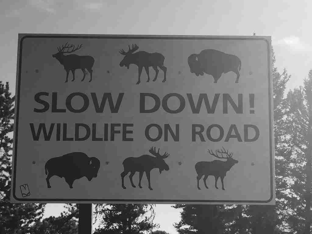 Wildlife on Road sign Yellowstone